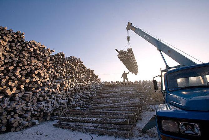 木材紧缺 地板价格受冲击